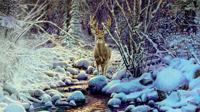 Wvu Spring 2020 Calendar Artwork Needed for 2020 Wildlife Calendar – West Virginia Division