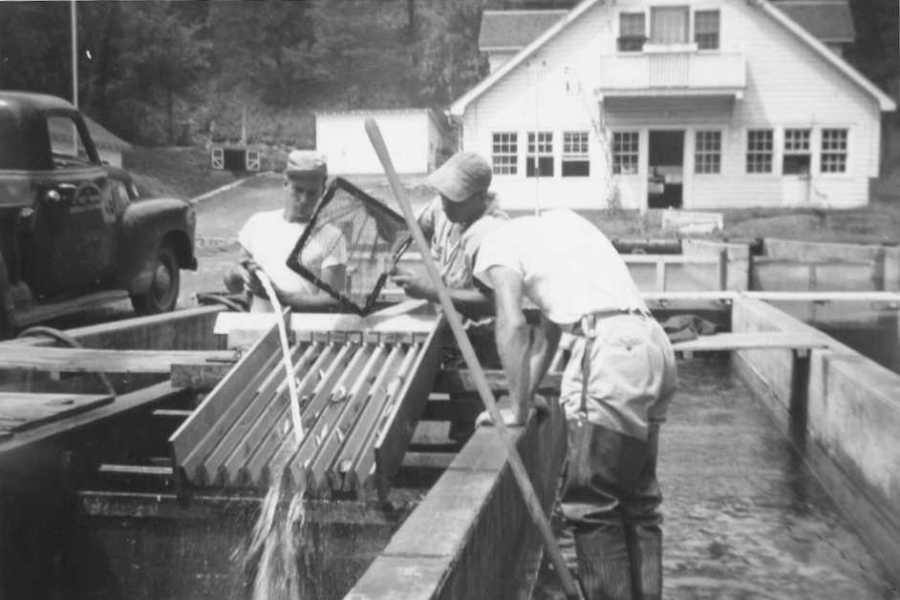 Petersburg, Historical B&W, Fish Grader, Sep-54 (300dpi)